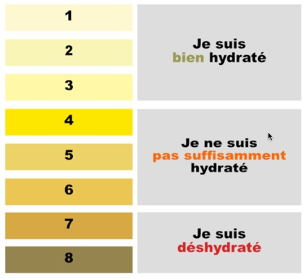 Couleur Urine Maison De La Nutrition